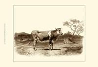 Bovine I Fine Art Print