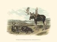 Moose Deer Fine Art Print