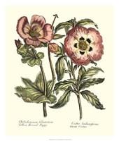 Framboise Floral IV Giclee