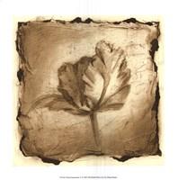 Floral Impression V Framed Print