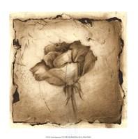 Floral Impression VI Framed Print