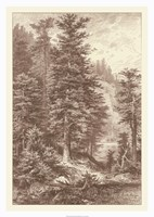 Sepia Noble Fir Giclee