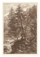 Sepia Larch Tree Giclee