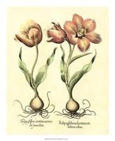 Bulb Garden III Giclee
