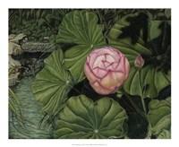 Enchanting Lotus Giclee