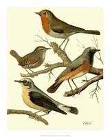 Domestic Bird Family III Giclee