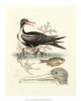 Aquatic Birds I Giclee