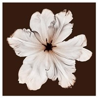 Ruffled Tulip Framed Print