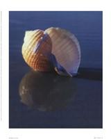 Tun Shell Framed Print