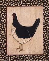 White Bellied Chicken Fine Art Print