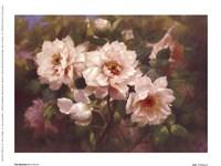 Full Blossom II Framed Print