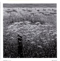 Fence Posts Fine Art Print