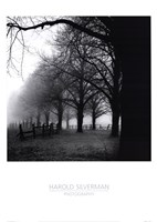 Black And White Morning Framed Print