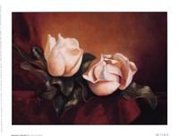 Magnolia Vignette ll Fine Art Print