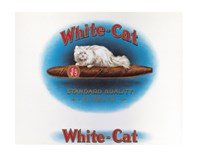 White Cat Wall Poster