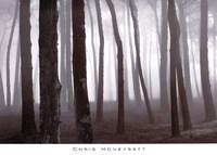 Trees In Fog, S. F. Presidio Fine Art Print
