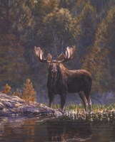 North Country Moose detail Fine Art Print
