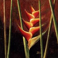 Heliconias En Naranja II Fine Art Print