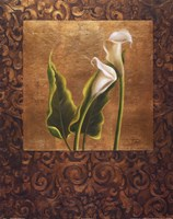 Calla Lily With Arabesque II Framed Print