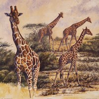 Safari III Fine Art Print