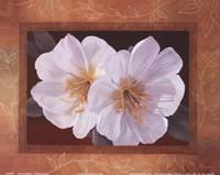 Morning Bloom Fine Art Print