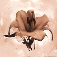 X-Ray White Lily Fine Art Print