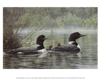 Northern Reflections - Loons Fine Art Print