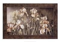 Field of Irises Fine Art Print