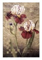 Grand Irises Fine Art Print