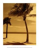 Palm Beach I Framed Print