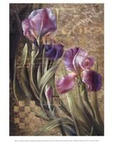 Iris Romance Fine Art Print