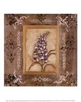 Lilac Fine Art Print