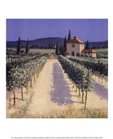 Vineyard Shadows Fine Art Print