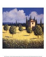Sun Kissed Orchard I Fine Art Print