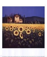 Golden Warmth II Fine Art Print