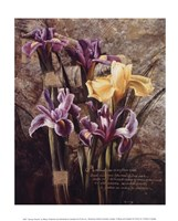Spring's Bounty Fine Art Print