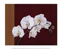 Orchid Study II Fine Art Print