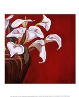 Callas on Red Fine Art Print