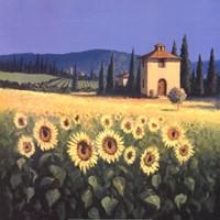 Golden Warmth Fine Art Print