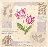 Renaissance Tulip Fine Art Print