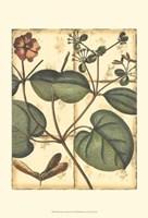 Printed Rustic Garden III Fine Art Print