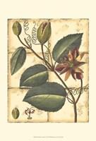 Printed Rustic Garden IV Fine Art Print