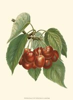 Red Cherries Fine Art Print