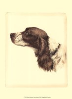 Printed Danchin Cocker Spaniel Fine Art Print