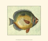 Small Butterfly Fish I Fine Art Print