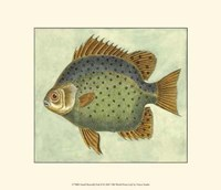 Small Butterfly Fish II Fine Art Print