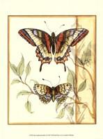 Mini Tandem Butterflies II Fine Art Print