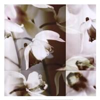 Cymbidium Orchid I Framed Print