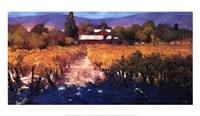 Vineyard Afternoon Fine Art Print
