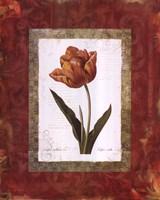 Tulipe Cultivee Framed Print